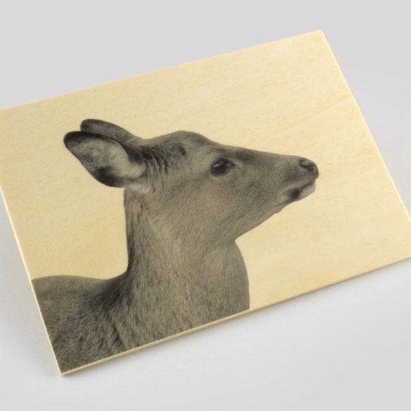 Wood-postcard-2-charity-wordpress theme
